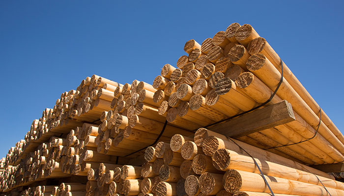 Untreated timber poles